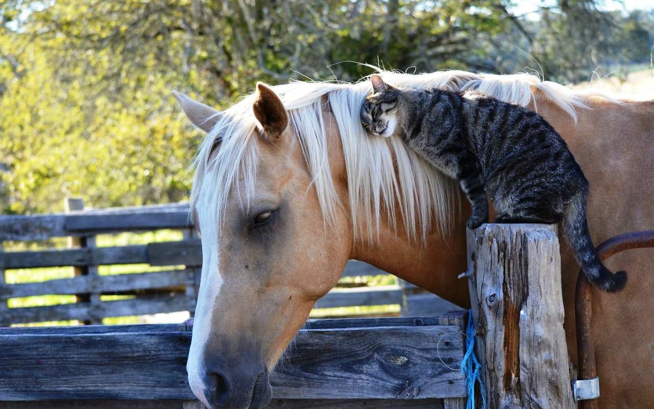Cat-Horse-animals-33788343-1280-800